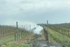 Kleiner Flurbrand nach Weingartenberäucherung