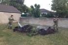 komposthaufenbrand ff-tadten
